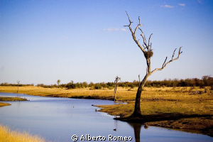 A beautiful  little lake in Kruger Parck by Alberto Romeo 